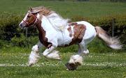 Hermosos Caballos Corriendo - Imágenes de Animales . Fotos e Imágenes en . caballos corriendo imagenes de animales