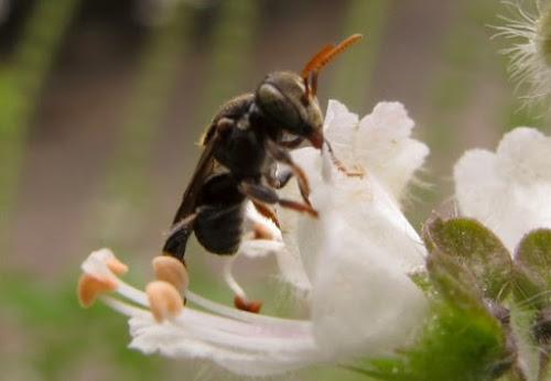 As plantas medicinais e a produção de mel