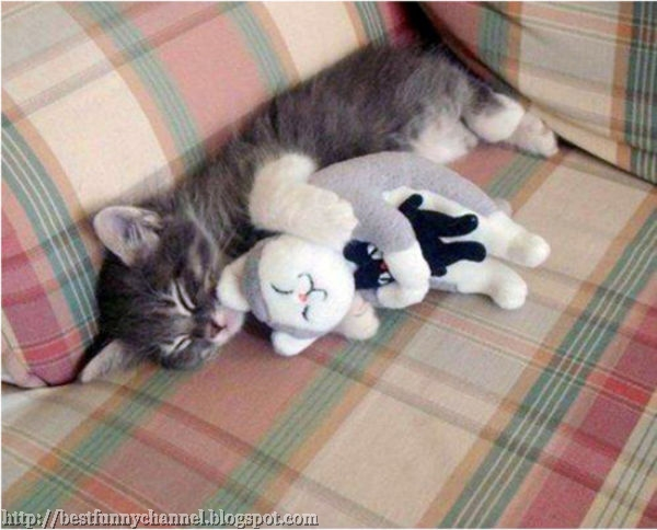 Kitten and toy.