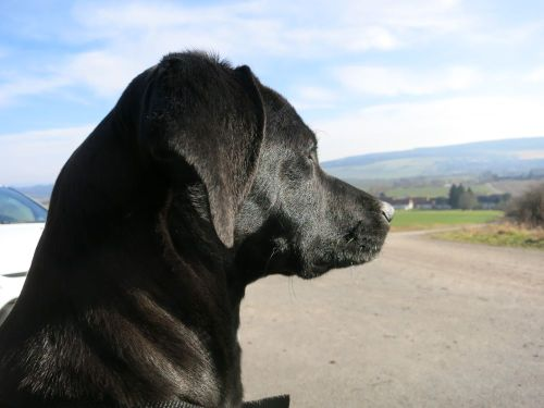 Mein Hund Subby