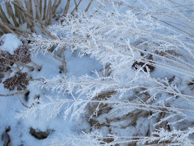 Frost on Prairie Dropseed foliage