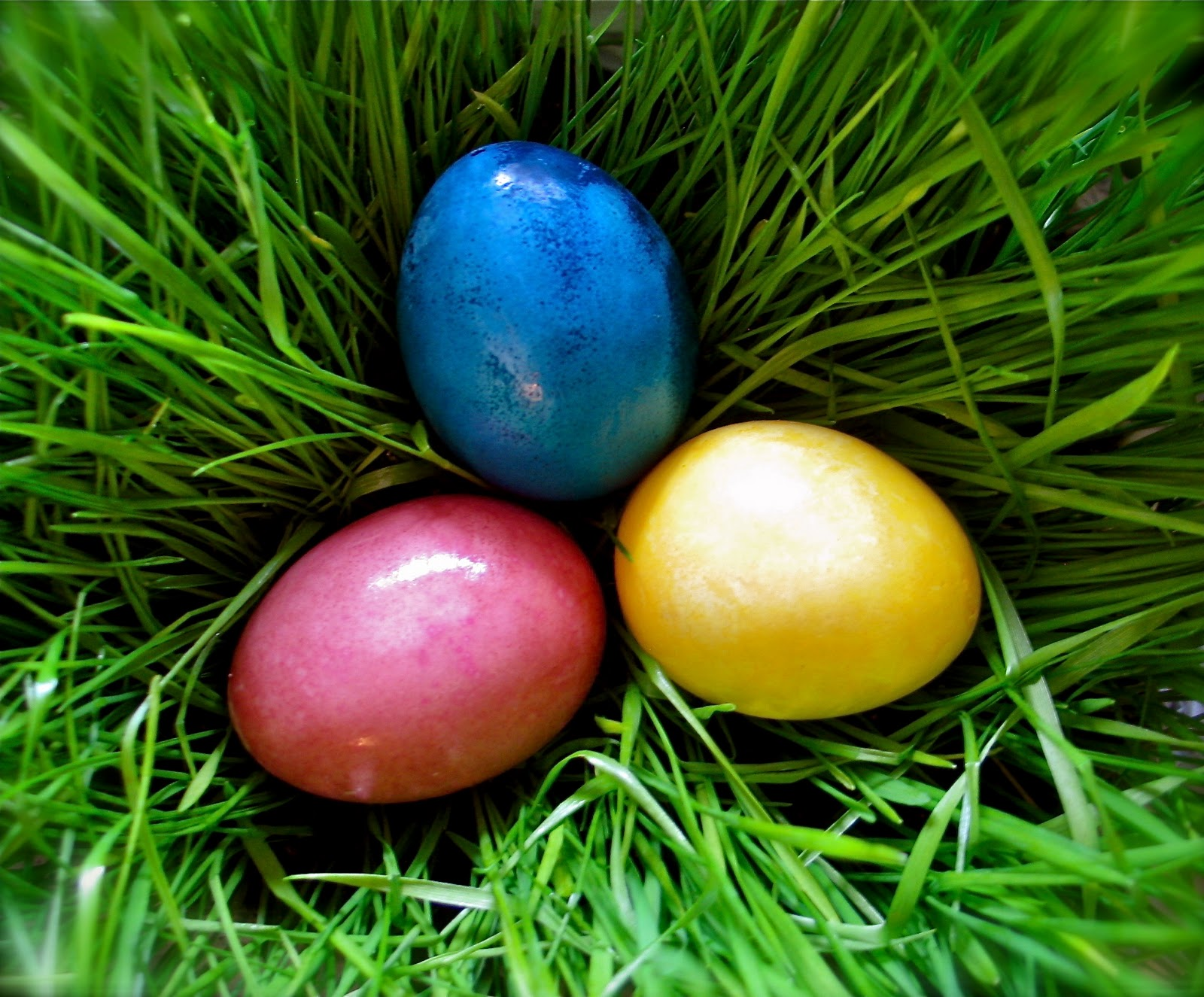Twig and Toadstool: Vibrant Vegetable Dyed Easter Eggs