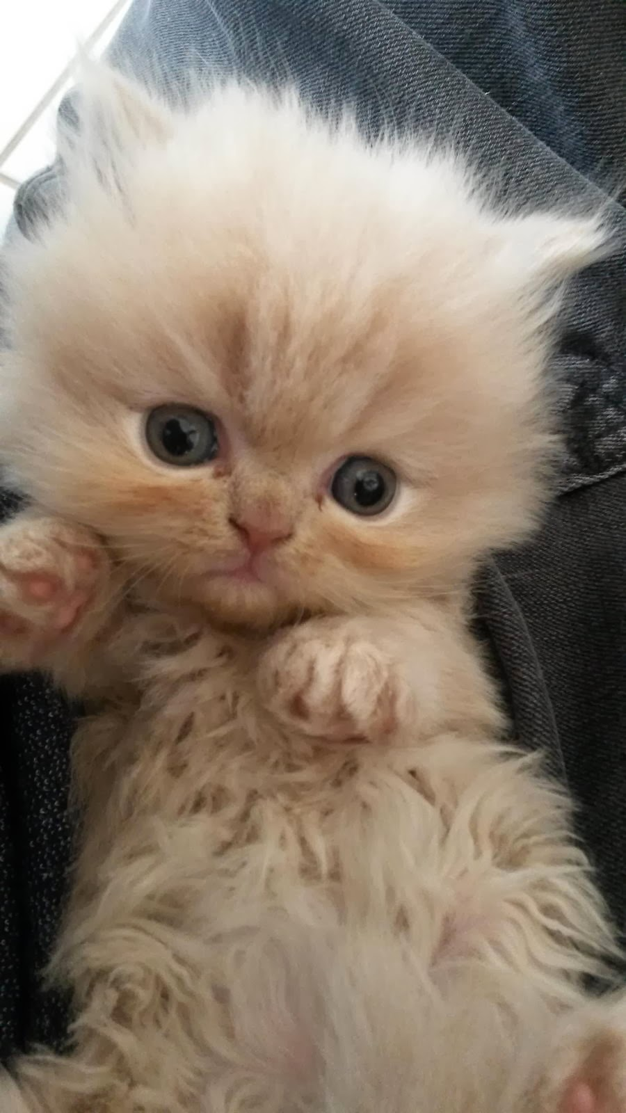 Funny cats - part 90 (40 pics + 10 gifs), adorable kitten picture
