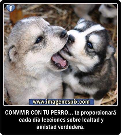 Imagenes De Amor Animales - Fotos Naturaleza Amor Animales Paisajes Y Algo Mas