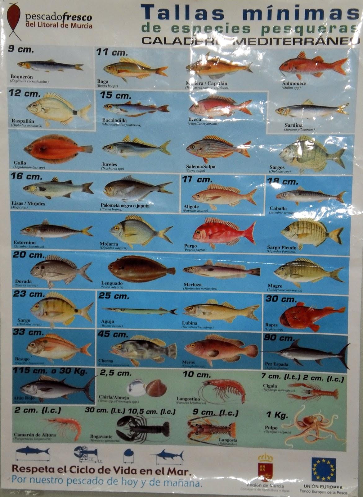 Tipos de peces del mar imagui - Fotos de peces del mediterraneo ...