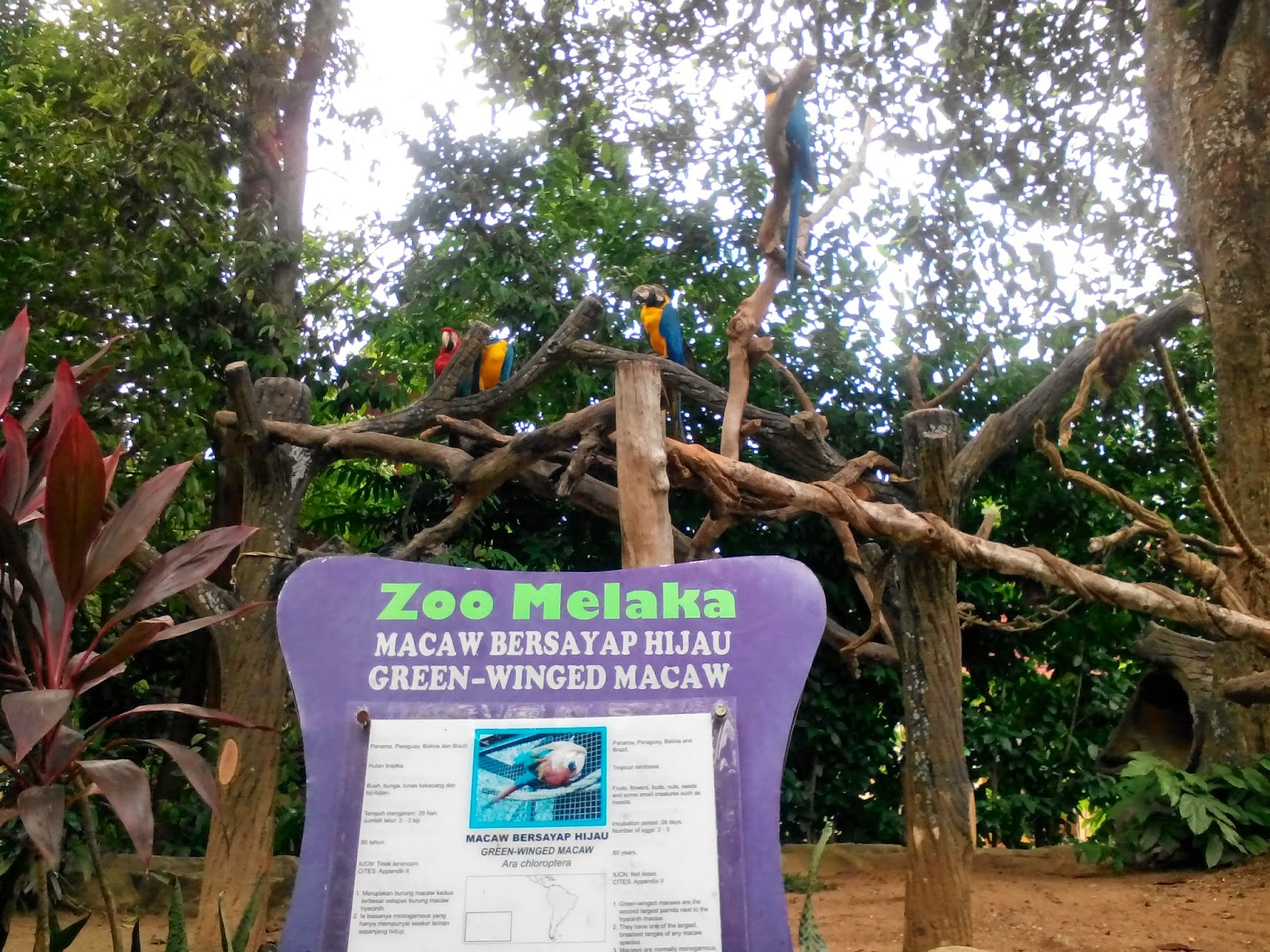 Aktiviti Adik Beradik Melawat Zoo Melaka di Hujung Minggu