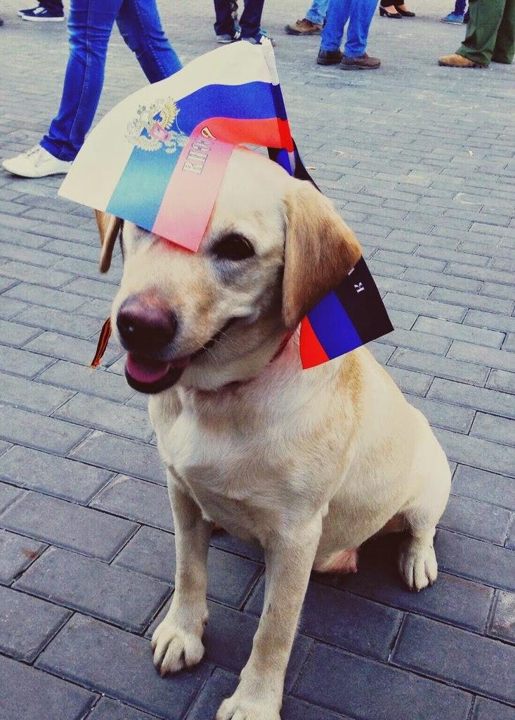 Вежливый пес 6