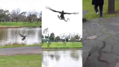 Cena inusitada, falcão pega cobra e joga em cima de uma família que almoçava ao ar livre