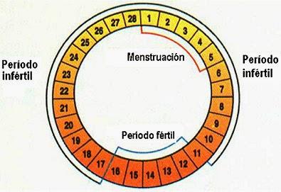 El método del ritmo y la sexualidad