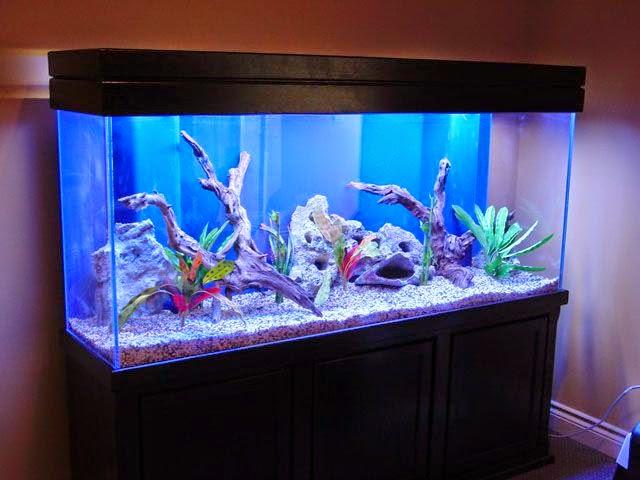 Cambiare l 39 acqua nell 39 acquario di casa varie for Acqua per acquario