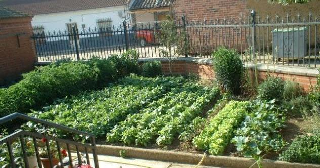 Garden center ejea como hacer una huerta en casa - Garden center ejea ...