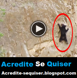Ursos Foram Flagrados Escalando Paredão de Pedras. Incrível