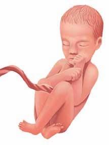 مراحل نمو الجنين الاسبوع الثامن والعشرون