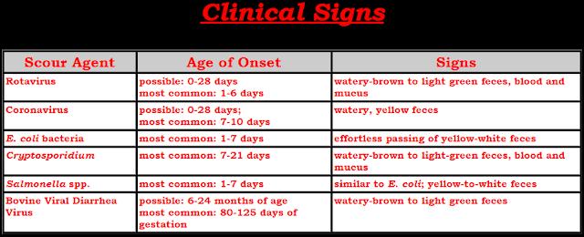 Chẩn đoán phân biệt một số bệnh gây tiêu chảy trên bê, nghé