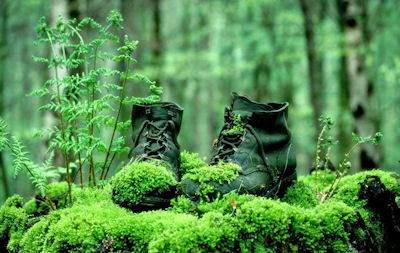 Botas olvidadas en el bosque cubiertas de musgo