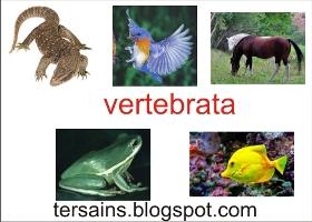 ciri-ciri vertebrata