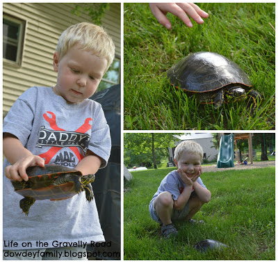 Finding painted turtles in the yard