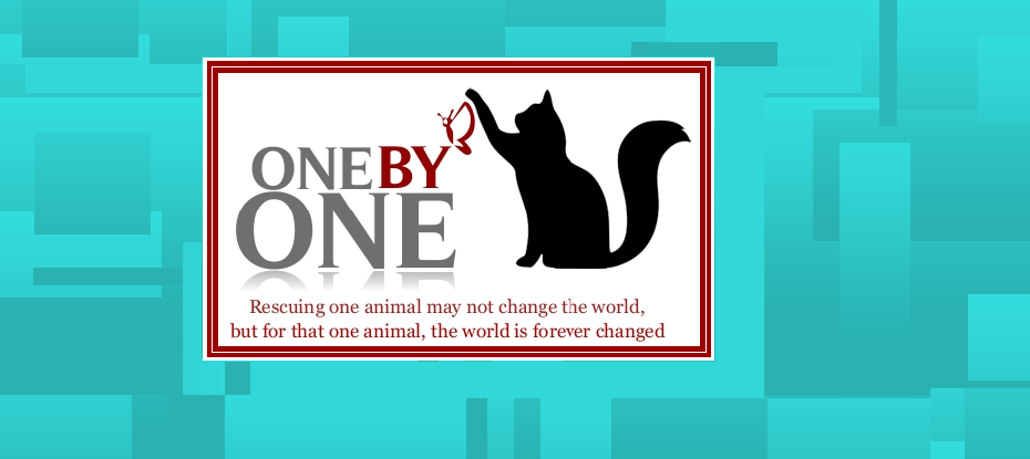 OnebyOne NJ Cat Rescue