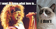Grumpy cat meets Foreigner. Grumpy cat meets Foreigner