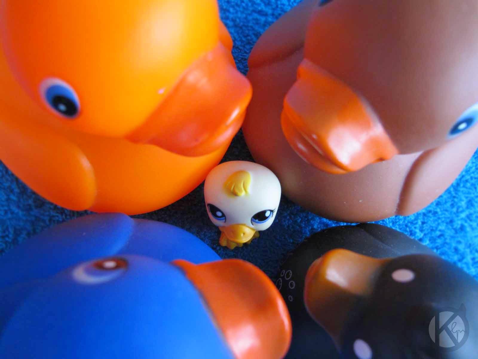 lps photo duck