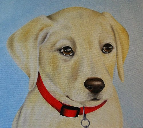 Labrador Puppy Pet Portrait