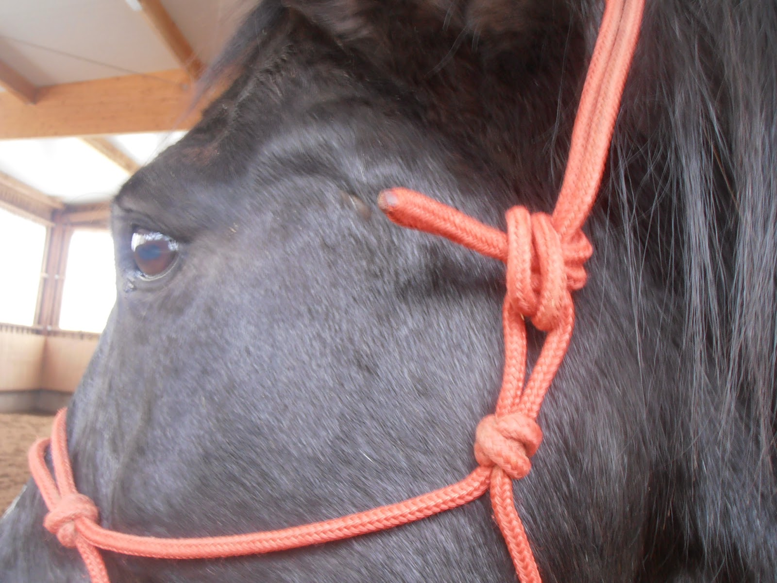 rope halter, use and fit, being with horses blog