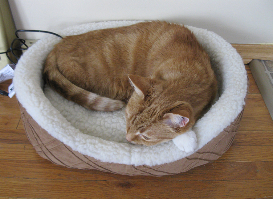 I Have Three Cats The New Cat Beds