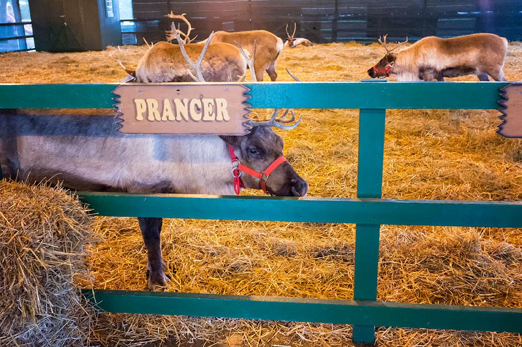 Santa's Reindeer at Hersheypark Christmas Candylane
