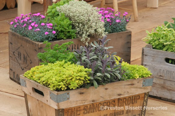 preston bissett nurseries and country shop more on how to plant, Natural flower