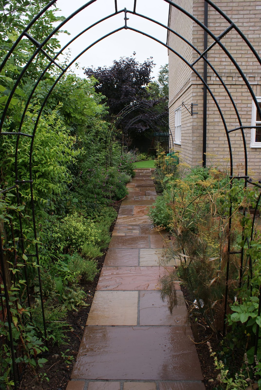 Town garden design in cambridge courtyard garden for Small narrow garden designs
