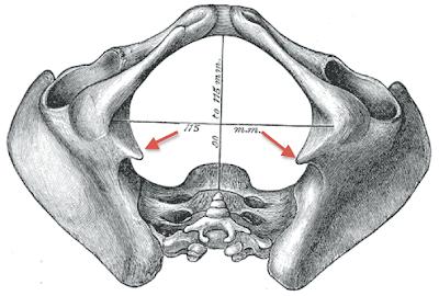 Les dorsalgies du côté des côtes sur le dos