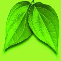 Cara menghilangkan bau badan dengan daun sirih
