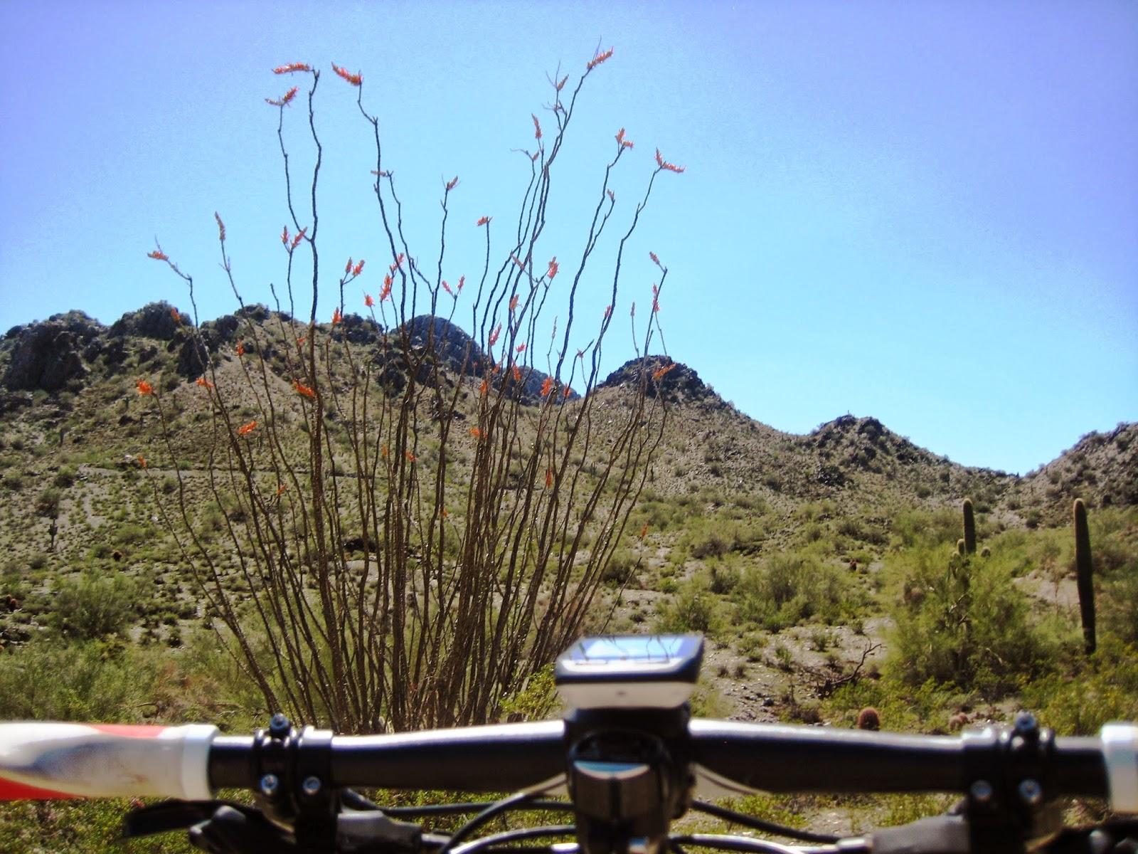 Phoenix Mountain Biking