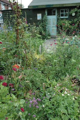 The Tuckshop Garden in late June with knautia, chives and foxgloves