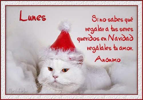 Colección de Gifs ®: SEMANARIOS DE NAVIDAD - DE GATITOS
