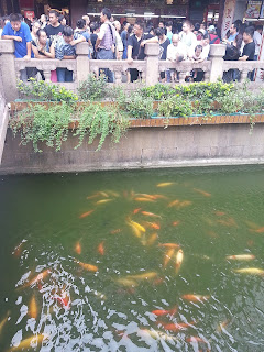 Fish in pond outside Yu Yuan Garden