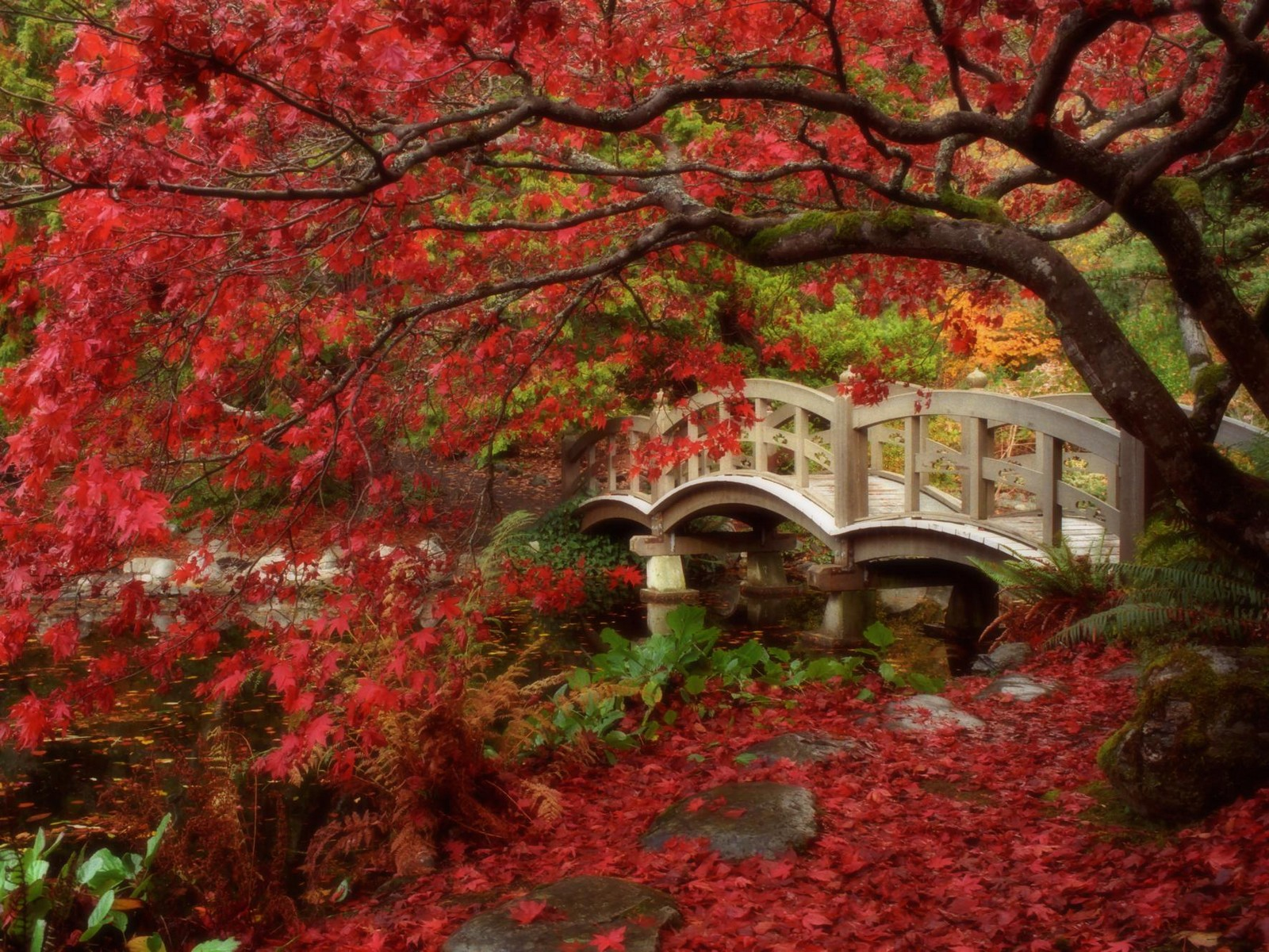 Hd Autumn Wallpapers Free Images Fun