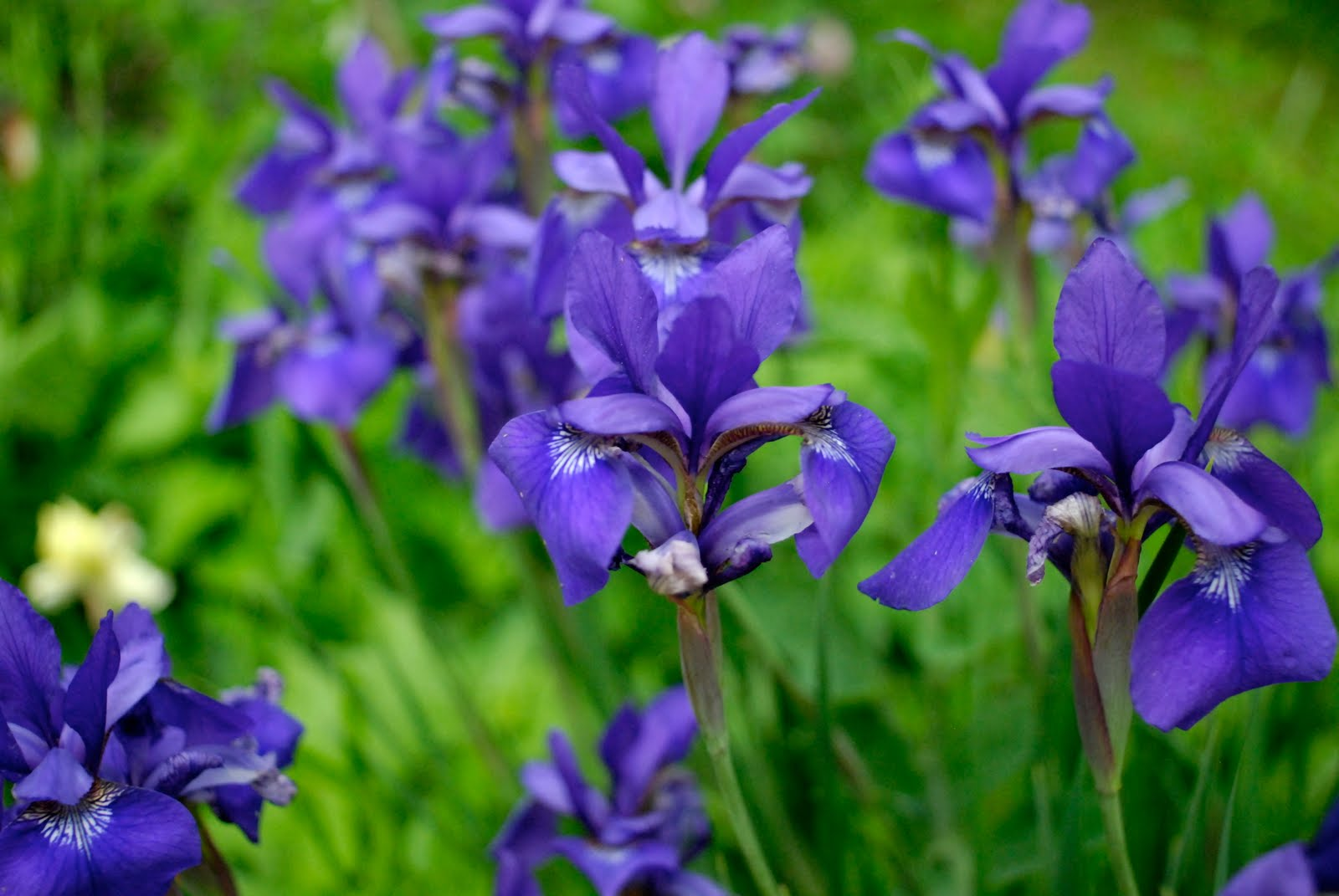 Tend perennial plant sale care for Plants for sale