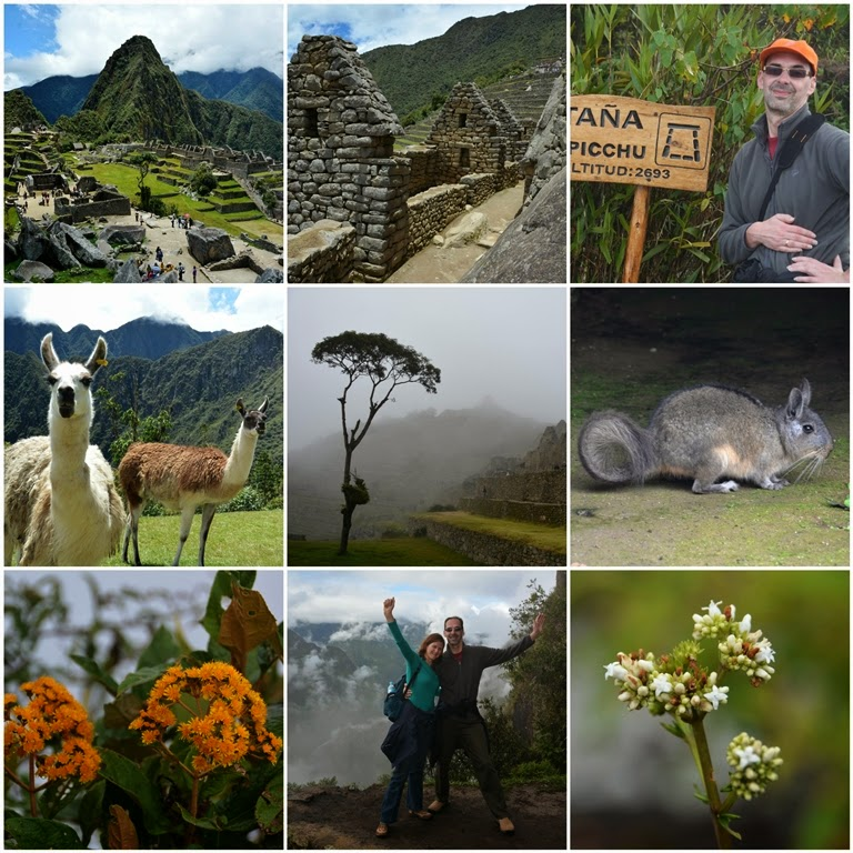 Collage June 2014 Machu Picchu