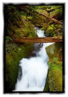 elwha creek