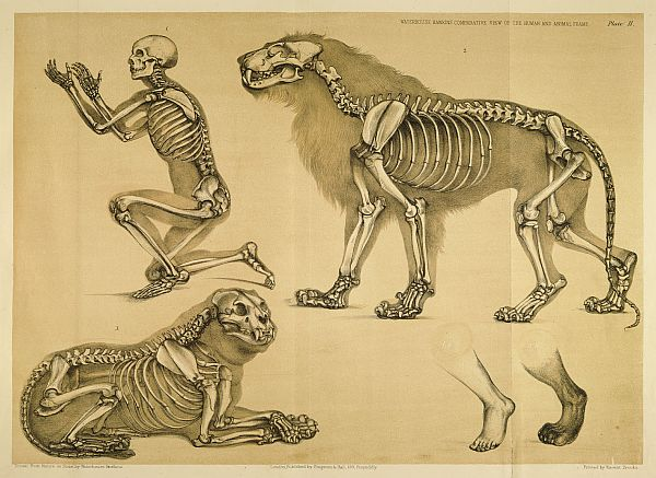 Morbid Anatomy: Comparative Anatomy: Animals and the Fundamentals of ...