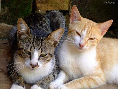 Conveniencia e inconveniencia gatos