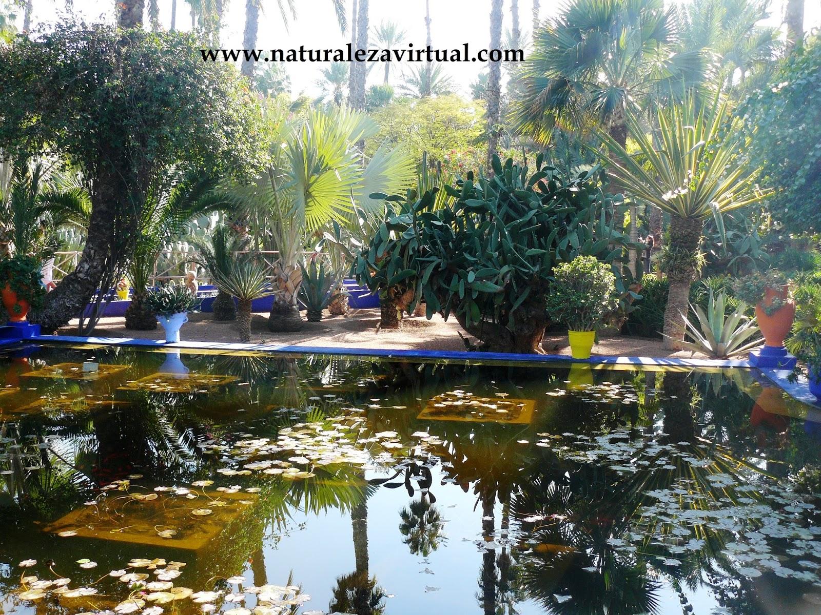 Jard n majorelle marrakech marruecos for Jardin majorelle 2015