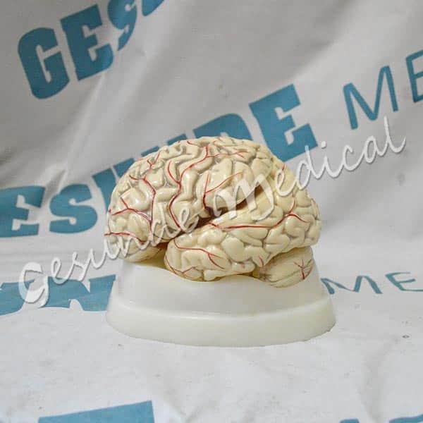 dimana beli torso otak murah