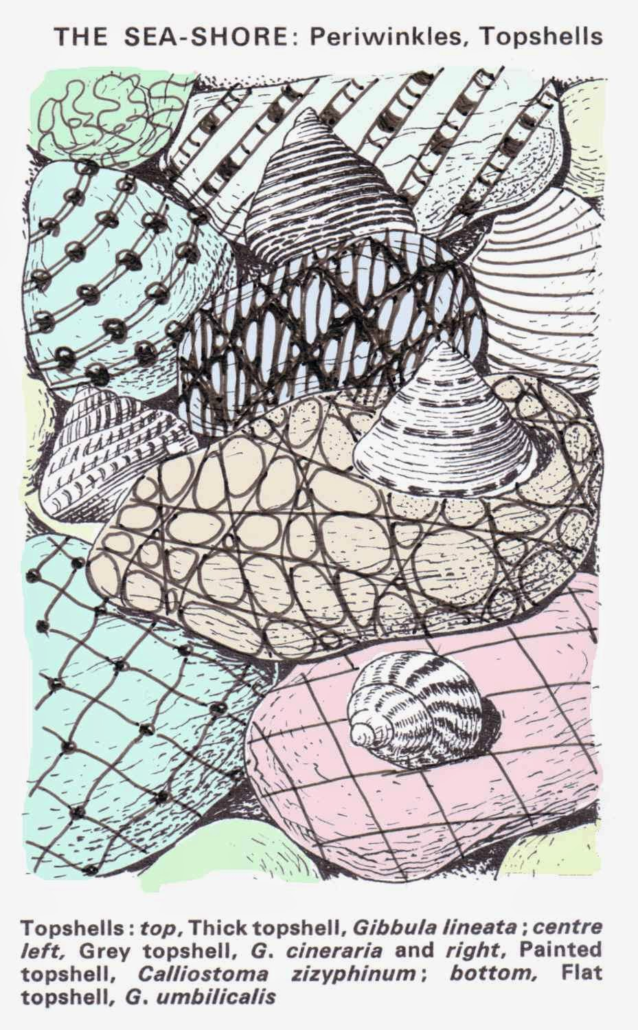 Zentangle drawn over illustration of shells and lightly coloured