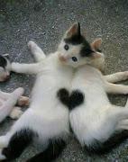 Amor♥Love