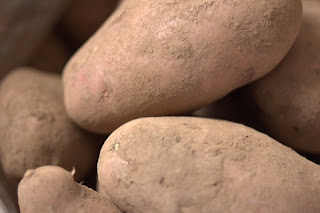 Sarpo Mira (maincrop) seed potatoes