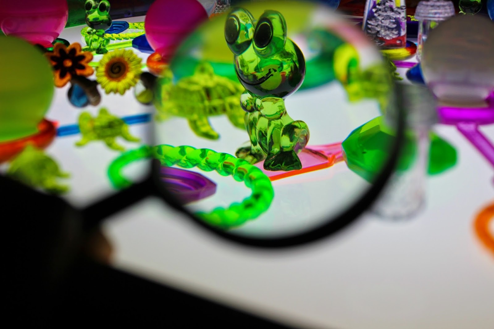 a frog close up with a magnifying glass on the light table