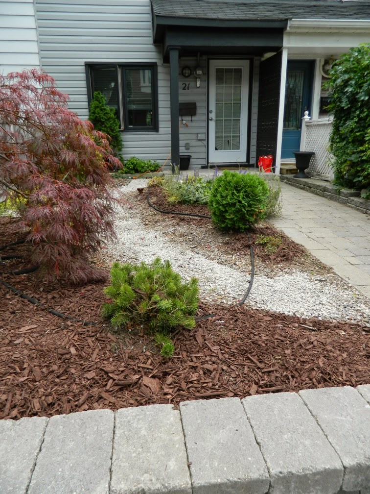 Paul Jung Gardening Services Toronto Leslieville garden cleanup front garden after