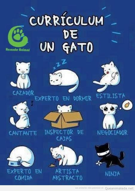 el cuidado de un gato: